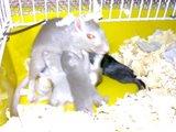 Mãe e filhotes