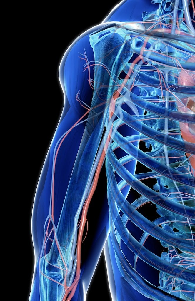 Doctorjara: Arteria Braquial