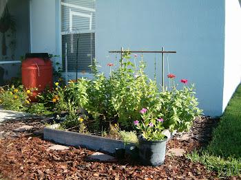 FL butterfly garden