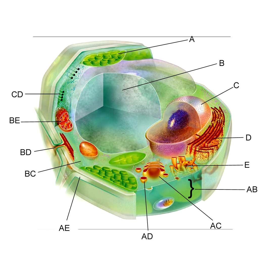 eukaryotic cell unlabeled - photo #26
