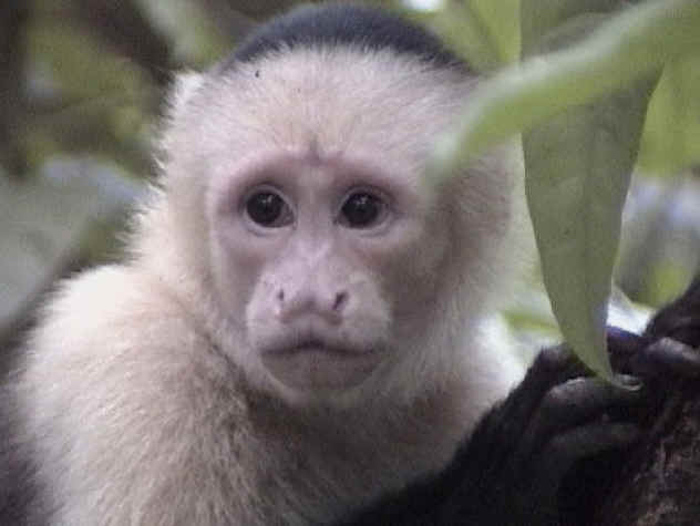 http://2.bp.blogspot.com/_9SlYS77Pdxg/TJN1wMCsB0I/AAAAAAAAE7c/kCBHg16PbNM/s640/white.monkey.jpg