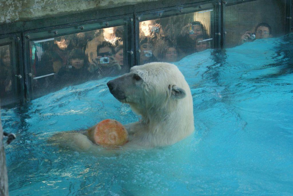 Murió el oso polar del Zoo