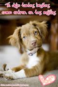 Tantos besitos · Enviar por correo electrónicoEscribe un blogCompartir con . perritoo
