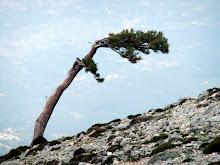El árbol.