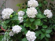 Las flores blancas.