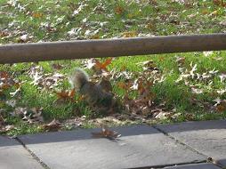 Finde das Eichhörnchen...