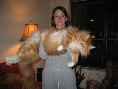 hoho.. Kucing ini sangat besar. Berapa agaknya berat ku