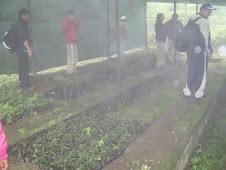 domingo 25 octubre-2009-reforestacion en LOMAS DE LACHAY