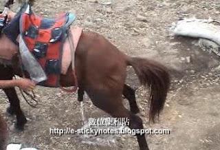 有馬偷尿尿