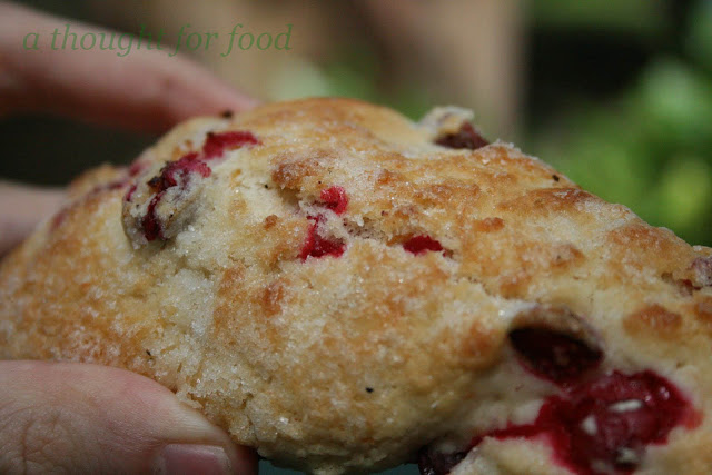 Recipe: Cape Cod Scones » A Thought For Food