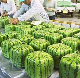 wmelon2