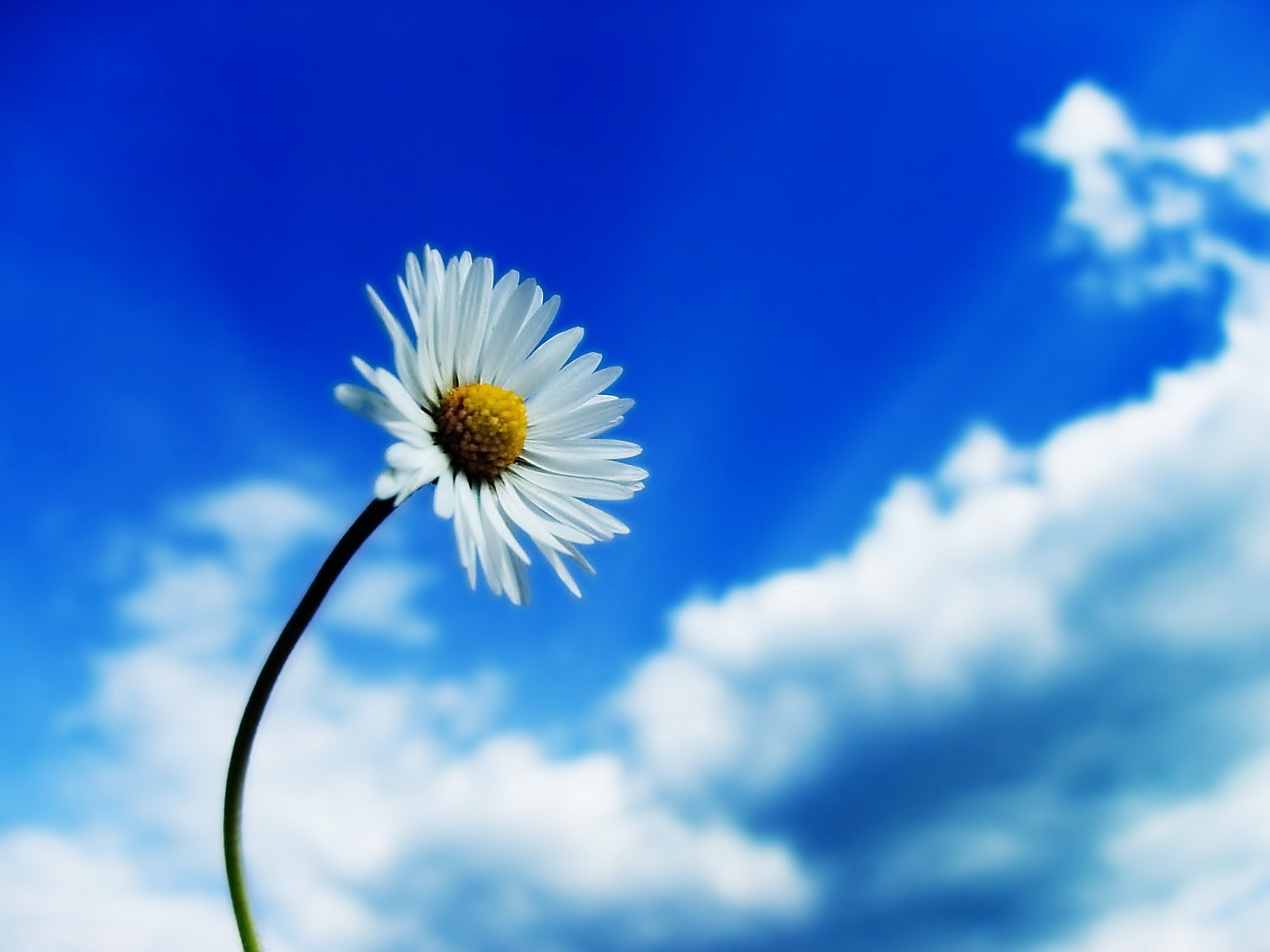 White-flower-and-blue-sky.jpg