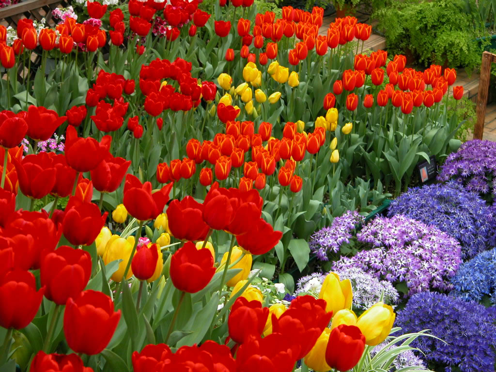 flores de jardim fotos:Imagens De Flores No Jardim