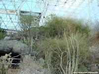 El maldito desierto dentro del desierto de Arizona, un sinsentido épico