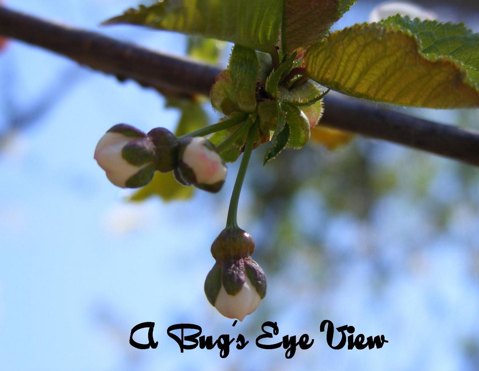 A Bug's Eye View