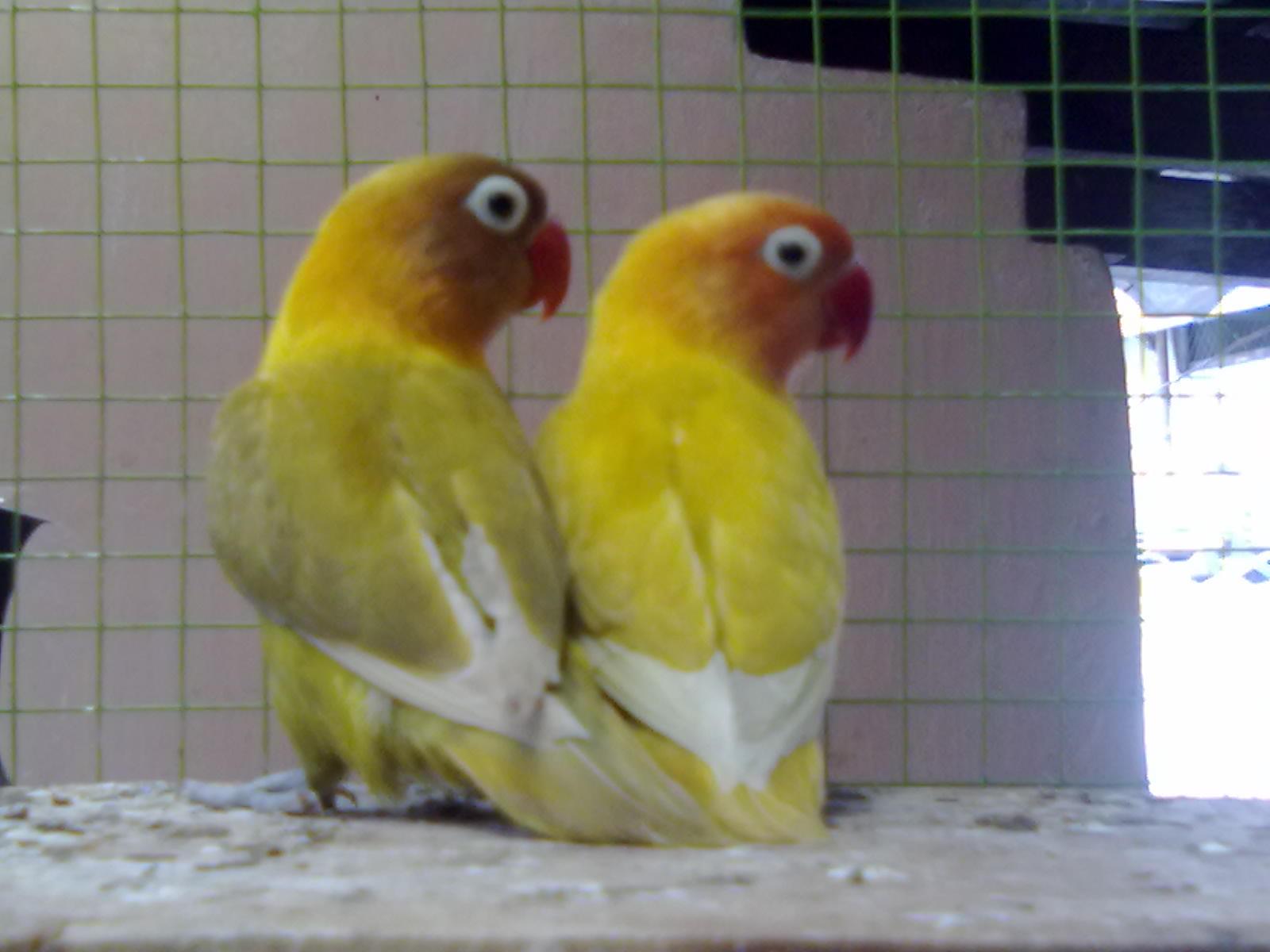pastel love bird cake ideas and designs
