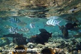 Pesci tropicali nel Mar Rosso