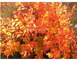 I colori autunnali del sommacco sul Carso