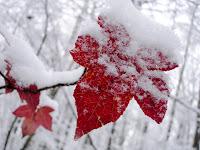 Cara Membuat Efek Salju dan Daun Berjatuhan di Blog