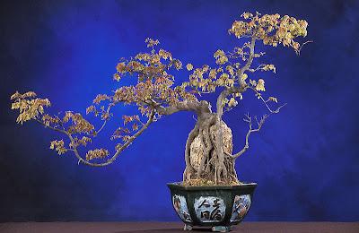museo+bonsai_madrid_sarah+abilleira