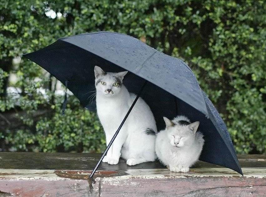 Nonblog di Habanera: Il gesto dell'ombrello