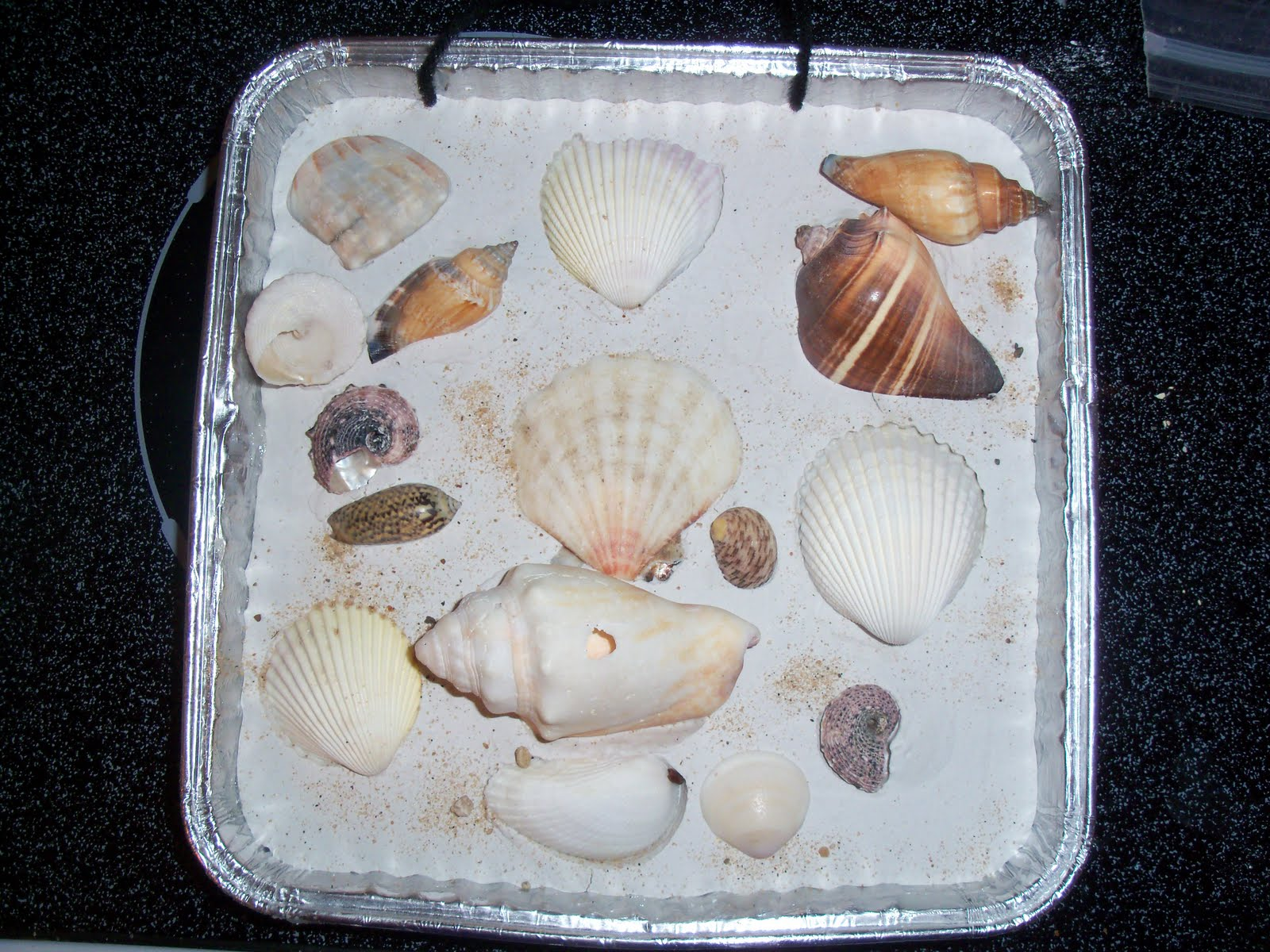 how to make a shell wall hanging