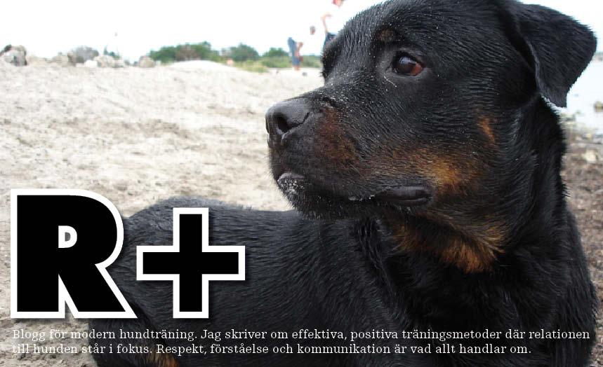 R+ Hundskola