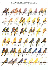 Posters de algumas das minhas especies favoritas...