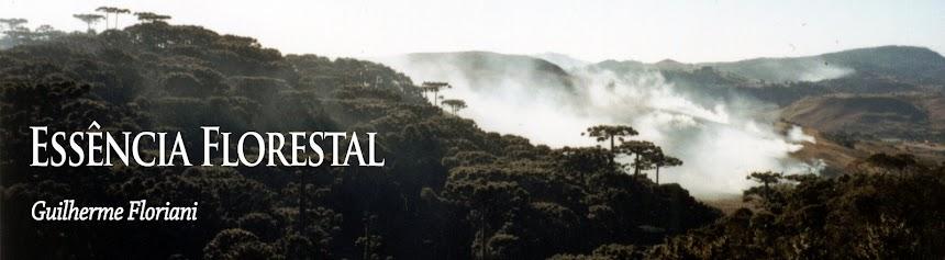 Essência Florestal
