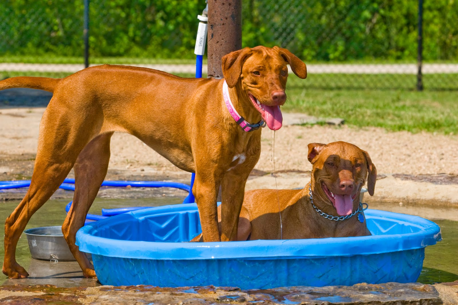 Dog Parks In Montgomery County Texas