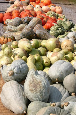 how to cook hubbard squash in oven