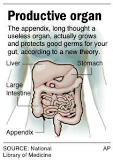 Apêndice (Appendix)
