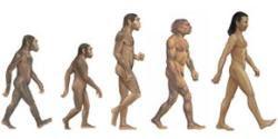novo icon evolucao humana human evolution