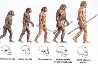 Evolução Humana human evolution
