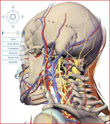 Visible Body cabeça coluna spine