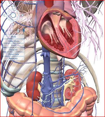 Visible Body coração heart rins