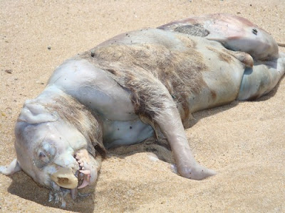 Monstro de Montauk monster