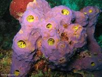 Esponja sponge