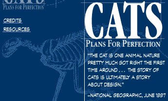 cats-design
