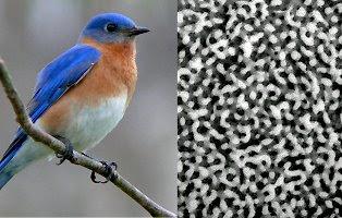 Cores das penas dos pássaros bird feather colors