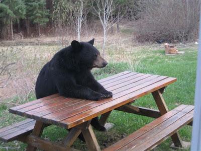 Bear waiting for dinner