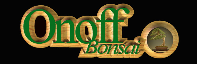 ONOFF BONSAI
