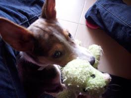 My Puppy Robbie