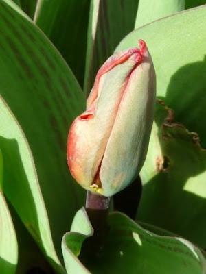 Pflanzen Flashcards Quizlet