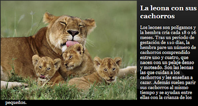 leona con cachorros