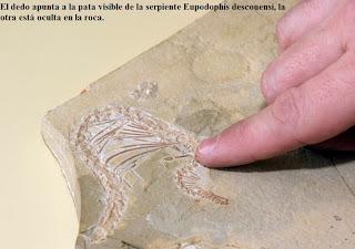 Fosil de serpiente