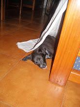O Sid, o meu cachorrinho