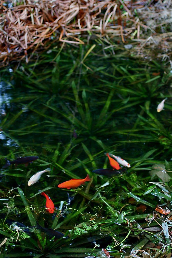 Wildwuchs unter aufsicht morgens am teich for Fische im teich