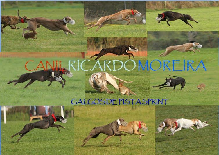 Canil Ricardo Moreira