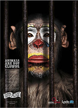 """""""Los animales no son payasos para ver en los circos"""""""